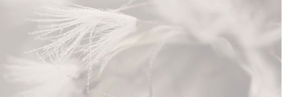 Der Liedschatten (50): Mit einem Blumenstrauß
